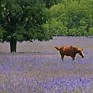 Horse in a Field of Wildflowers by Paul  Huchton