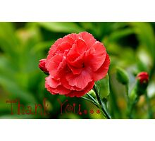 Thank you! - Red Carnation - Southland NZ Photographic Print
