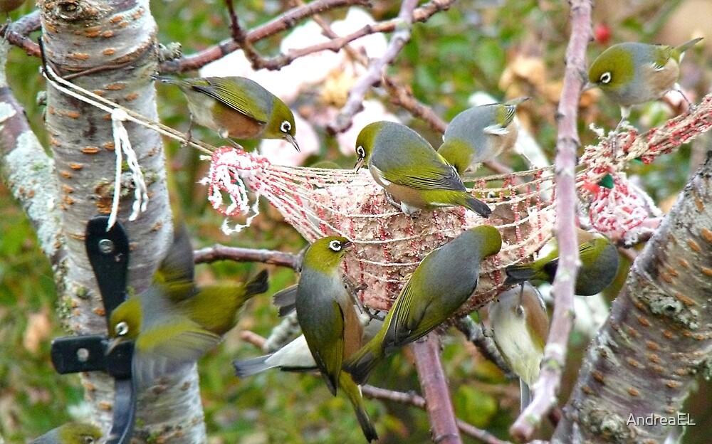 The Bird Feeder! Silver-Eyes Feeding - Soutland NZ by AndreaEL
