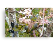 The Bird Feeder! Silver-Eyes Feeding - Soutland NZ Canvas Print
