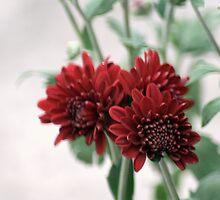 flower 39 by Kittin