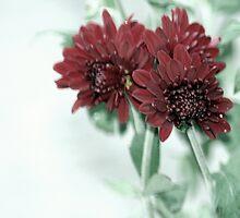 flower 41 by Kittin
