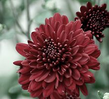 flower 45 by Kittin