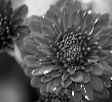 flower 46 by Kittin