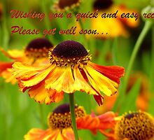 Get Well Soon - Greeting Card - Black Eyed Susan - Cone Flower - NZ by AndreaEL