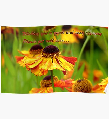 Get Well Soon - Greeting Card - Black Eyed Susan - Cone Flower - NZ Poster