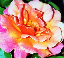 Rain splattered rose by ♥⊱ B. Randi Bailey