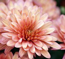 flower 51 by Kittin