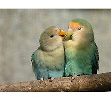 Oh!! Come On Give Me A Kiss..-Lovebirds - NZ Queenspark Photographic Print