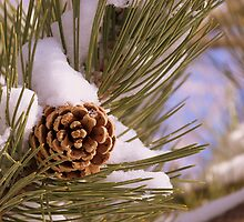 cone in snow by Jody Johnson
