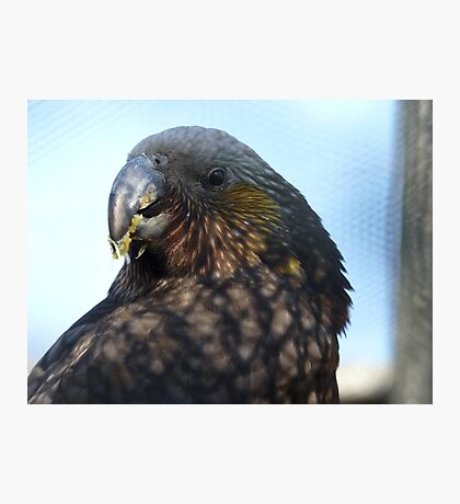 I Refuse To Share This! - Kaka - Queenspark NZ Photographic Print
