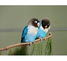 I Am Listening, Carry On....Blue Masked Lovebirds - NZ Photographic Print