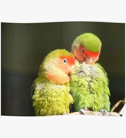 When You Need A Shoulder To Lean On! - I Am Here! - Lovebirds - NZ Queenspark Poster