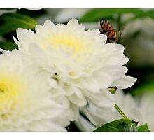 flower 53 Photographic Print