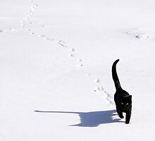 Snow Cat by rdshaw