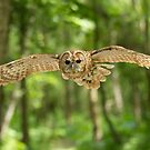 Owl flight by Anthony Brewer