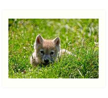 If they could only stay so young - Arctic Wolf Pup Art Print