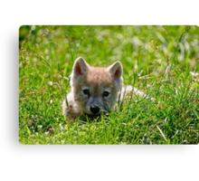 If they could only stay so young - Arctic Wolf Pup Canvas Print