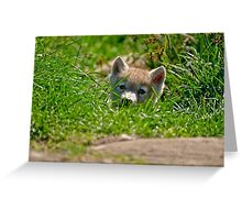 Who Me?? Arctic Wolf Pup Greeting Card