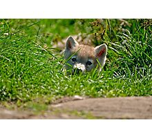 Who Me?? Arctic Wolf Pup Photographic Print