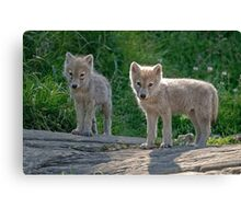 Arctic Wolf Pups  Canvas Print