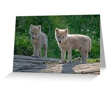 Arctic Wolf Pups  Greeting Card