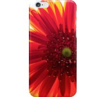 Red and Yellow Macro Daisy iPhone Case/Skin