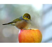 If This Is The Big Apple, I Must Be King Kong! - Silvereye - NZ Photographic Print