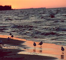Sunset on Lake Ontario by pwall