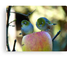 Eating Our Way ThroughThe Big Apple! - Wax-eye - NZ Canvas Print