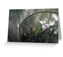 Spring in Miniature Greeting Card