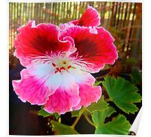 gardening geranium Poster