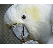 I Have Something Divine!!! - White Cockatoo - NZ Photographic Print