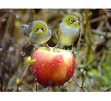Who'll Stop the Rain From Falling Down On Us? - Silvereyes-NZ Photographic Print