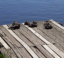 Ducks by the lake by Denny