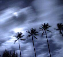 Hawaiian Palm Trees at Night by Bass Sears