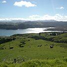 Landscape - Coramundel NZ by oiseau