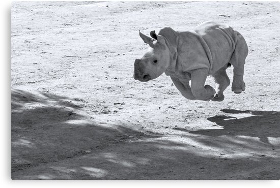 I can fly! Oww... no I can't by Cathleen Tarawhiti