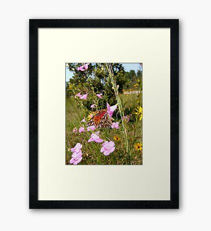 Gulf Fritillary in Purple Gerardia Framed Print