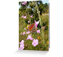 Gulf Fritillary in Purple Gerardia Greeting Card