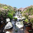 Glendalaugh Stream #1 by Larry149