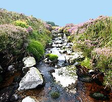 Glendalaugh Stream #1 by Larry149