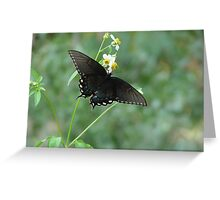 Tiger Swallowtail in Bidens alba Greeting Card