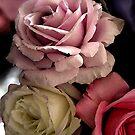 Three roses  by Roz McQuillan