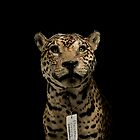 Panthera Onca by Marcel Lee