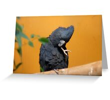 I Know I Shouldn't Bite My Nails!!! - Red-tailed Black Cockatoo - NZ Greeting Card