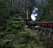 Steam train rattles through the fern gullies by boudidesign