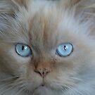 blue eyes by picketty
