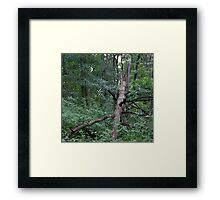 HDR Composite - A Fallen Tree along the Path Framed Print