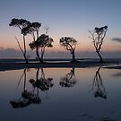 My Dancing Trees - Beachmere by Barbara Burkhardt